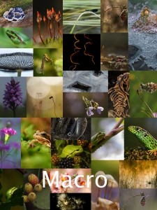 fotowedstrijd2016_macro_collage