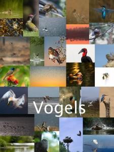 fotowedstrijd2016_vogels_collage