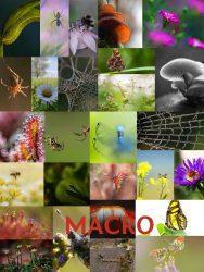 VNF-N fotowedstrijd 2017 Macro