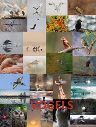 VNF-N fotowedstrijd 2017 Vogels