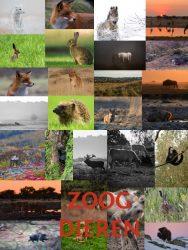 VNF-N fotowedstrijd 2017 Zoogdieren